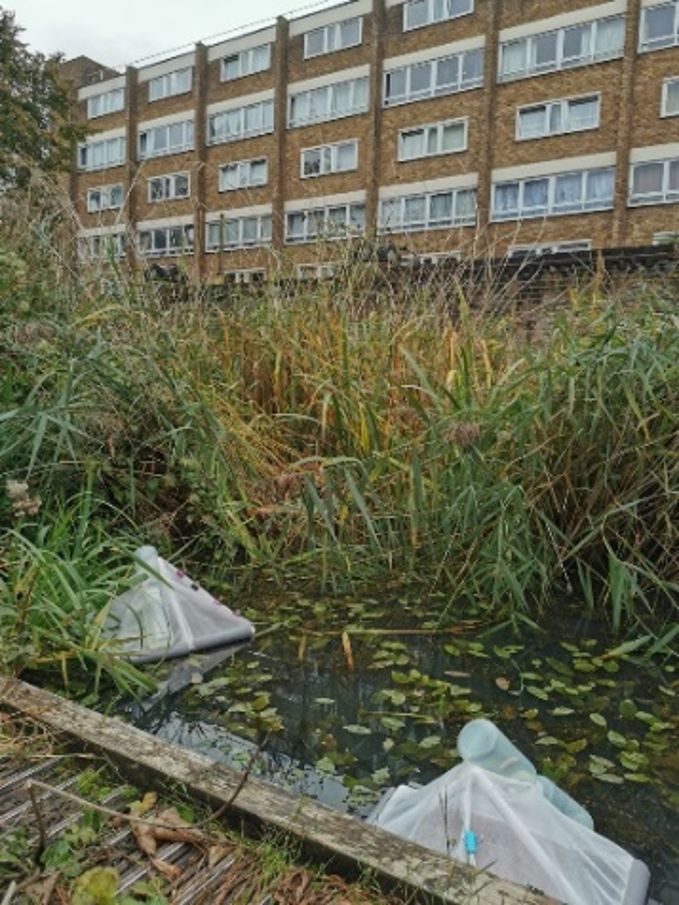 Europonds traps in Soanes Centre pond